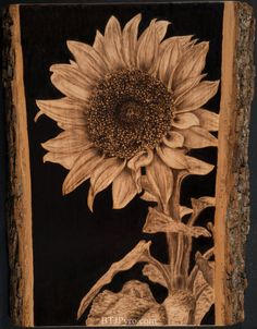 Pyrography of a sunflower. Handcrafted woodburning made by me. Around 10 inches x 13 inches, basswood. FOR SALE HERE Fast-motion progression video. Pyrography of a Sunflower Wood Burning Crafts, Wood Burning Patterns, Wood Burning Art, Sunflower Art, Sunflower Pattern, Pyrography Patterns, Pyrography Ideas, Small Wood Projects, Wood Burner