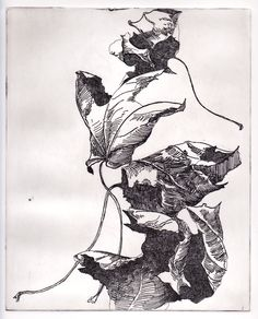 Leaves, line etching