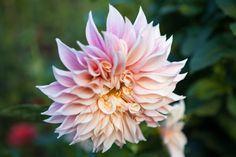 Lush Life : Heal The Earth Through Your Garden