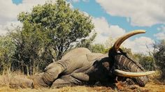 Petition · EU Scientific Review Group Director General Daniel Calleja: Stop the EU again allows Zambian elephant trophy hunt products to be imported · Change.org