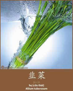 韭菜 - Jiǔ cài - hẹ - Allium tuberosum
