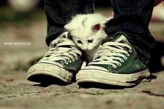 All stars Animal Animals Art Cat Chucks Cons Yea Photography Converse - PicShip White Kittens, Little Kittens, Kittens Cutest, Cute Cats, All Star, Kittens And Puppies, Cats And Kittens, Animals And Pets, Cute Animals