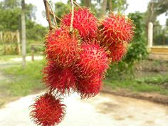 Ranbutan also know as (Chom Chom), a fruit that I miss in Vietnam. Its delish!