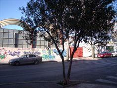 Olivo y grafittis