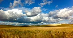 Soon to be home, the summer wheat fields surrounding Moscow, Idaho. Photo by Jan Perley