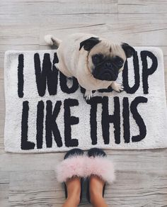 Pin by Pug Planet on PugLife Mans Best Friend, Girls Best Friend, Baby Animals, Cute Animals, Pug Love, Cute Creatures, Fur Babies, Cute Dogs, Puppies