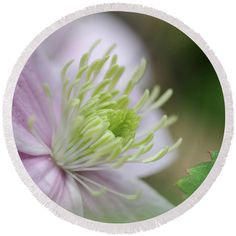 Clematis Round Beach Towel featuring the photograph Clematis And Leaf by Mo Barton