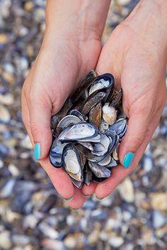 Mussel shells - childhood memories