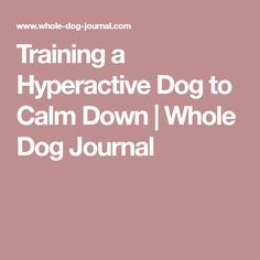 Training a Hyperactive Dog to Calm Down | Whole Dog Journal