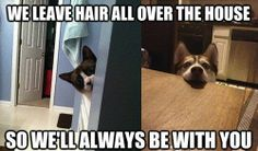 Funny pictures about Overly Attached Pets. Oh, and cool pics about Overly Attached Pets. Also, Overly Attached Pets. You Funny, Funny Cute, Funny Dogs, Funny Stuff, Hilarious, Funny Drunk, Awesome Stuff, Funny Animal Pictures, Funny Animals