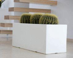 Cactus en pot