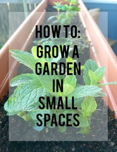 How to Grow a Garden in Small Spaces on TheRuralKitchen.com