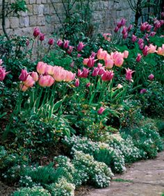 I love Tulips, one of my favorites.... use milorganite to keep Deer and Rabbits away. Throw on every week in the spring. If there really hungry nothing works but I had all my tulips last year, though we only have a couple of Deer.