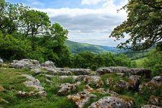 Looking across Hubberholme Woods in Langstrothdale, (Upper Wharfedale) #Yorkshire_Dales National Park, #England.