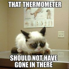 Tard the Cat: That thermometer should not have gone in there