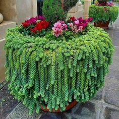 The cute succulents are the best choice to decorate your home.We have collected 45 cute successful plants ideas for you to decorate your home.Hopefully, these succulents will put you in a good mood every day. Succulent Landscaping, Succulent Gardening, Cacti And Succulents, Yard Landscaping, Planting Succulents, Container Gardening, Planting Flowers, Organic Gardening, Succulent Outdoor