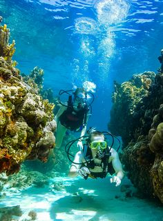 Experience the magic of Bahamas diving at Sandals Resorts. Bahamas Vacation, Cruise Vacation, Vacation Spots, Caribbean Vacations, Beach Resorts, Scuba Destinations, Scuba Diving Pictures, Beaches Turks And Caicos, Undersea World