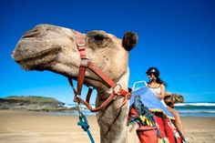 # 21 - Camel rides on the beach