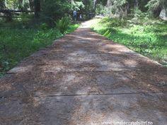 Tinovul Mare Sidewalk, Park, Plant, Walkway, Pavement