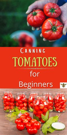 """Want to have the amazing taste of fresh tomatoes all year long? Let me show you how to easily and safely preserve your tomatoes with """"Canning Tomatoes for Beginners""""! #tomatoes. Canning Tomatoes, Canning Vegetables, Home Grown Vegetables, Tips For Growing Tomatoes, How To Can Tomatoes, Canning Jar Labels, Canning Recipes, Preserving Food, Homestead Survival"""