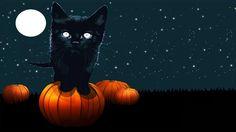 Black Cat on Pumpkin Staring Halloween Background