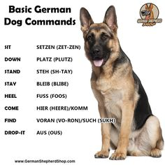 German commands - AL Pets German Shepherd Colors, German Shepherd Training, German Shepherd Pictures, German Dogs, German Shepherd Puppies, Baby German Shepherds, German Dog Commands, Basic German, Puppy Names