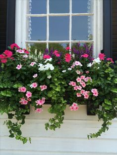 Love the lush ivy used with the pretty pink blooms in this window box Modern is part of Container gardening flowers Love the lush ivy used with the pretty pink blooms in this window box Love the lu - Window Box Plants, Window Box Flowers, Window Planter Boxes, Planter Ideas, Window Boxes Summer, Balcony Window, Outdoor Flowers, Annual Plants, Container Flowers