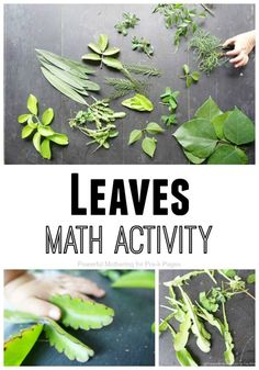 Leaves Math Activity for Preschool. This super simple activity is perfect for Fall OR Spring at home or in your preschool classroom. Learn math skills with leaves! Maths In Nature, Nature Activities, Spring Activities, Math Activities, Maths Fun, Family Activities, Nature Nature, Math Class, Preschool At Home