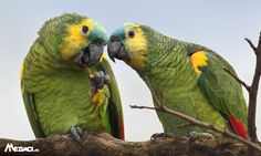 Parrot, Bird, Animals, Parrot Bird, Animales, Animaux, Birds, Parrots, Animal