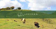 自然放牧で健康的に過ごしている「しあわせな乳牛」の、おいしくて安全な牛乳をお届けしています。催事(デパートやイベント)のご案内から出張販売も行っています。