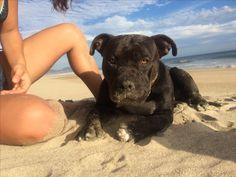 Pitbulls, Dogs, Animals, Animales, Animaux, Pitt Bulls, Pet Dogs, Pit Bulls, Doggies