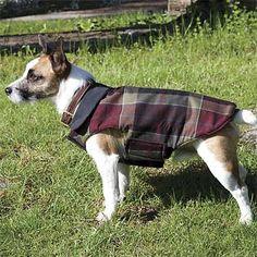 Orvis reversible jacket.  Not pictured, but Mack needs the herringbone pattern.
