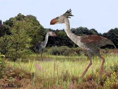 Phorusrhacos (more commonly known as the terror bird) 8 foot tall killer birds used to be the top predators of South America before the saber-toothed cats moved in had relatives in North America in Walking with Beasts
