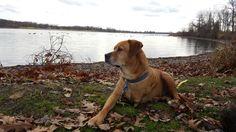 My 3 Legged Dog loves the park http://ift.tt/2l2RDG5
