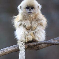ai meu deus, quero um macaco