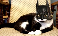 I'm taking a nap, fighting crime can wait