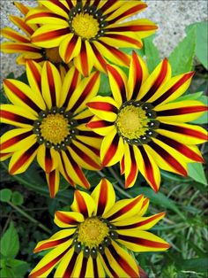 Flawless 45+ Beautiful and Unique Flower You Should Have In Your Garden http://goodsgn.com/gardens/45-beautiful-and-unique-flower-you-should-have-in-your-garden/