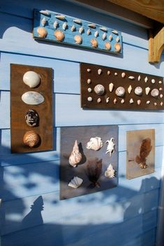 Shell display at the Blue Bungalow Rest. Harbour Island, Bahamas.
