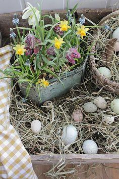 VIBEKE DESIGN: Easter's beautiful flowers and ceramics
