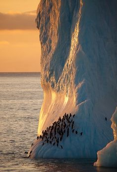 Earth,Sea, Penguins -Antarctica