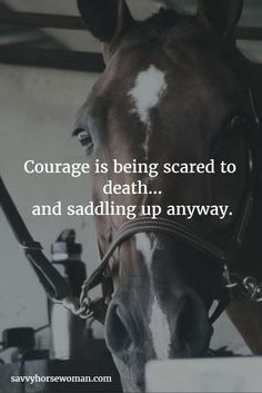 Courage | 13 Quotes: What Horse Riding Teaches You About Life