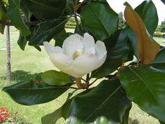 El Feng Shui y las flores: ¡Canaliza energías positivas!