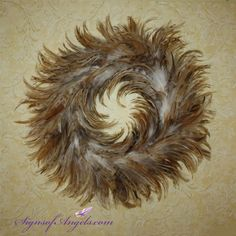 """Feathers appear when Angels are near."" Decorate your home with feathers!"
