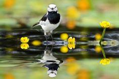 Reflejos sobre el agua