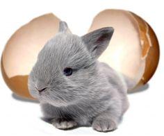 de Konijnen winkel !! voor konijnen !!