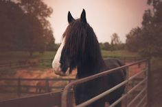 HORSES - Kristin Leigh Photography