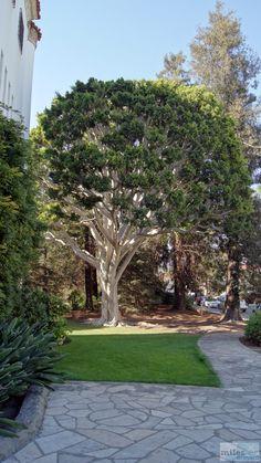 - Check more at https://www.miles-around.de/nordamerika/usa/kalifornien/highway-no-1-von-morro-bay-bis-simi-valley/,  #Geocaching #Guadalupe-NipomoDunes #HighwayNo.1 #Hotel #Kalifornien #Nationalpark #Natur #Pazifik #Reisebericht #SantaBarbara #Shopping #USA #Wüste