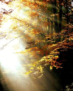 Wald, Licht, Herbst, Bäume, Laub, Farbig