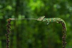 An incredible shot of a chameleon has won the best nature photograph in global photography social network Agora's latest contest. New Atlas has selected some highlights from the finalists, spanning a sublime array of perspectives on the natural world.