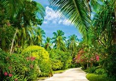 181 - Tropical Pathway - W+G
